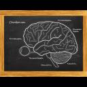 Cerebrum - Das Quiz