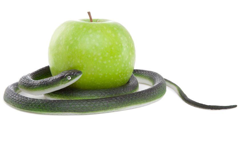 Apple Schlange