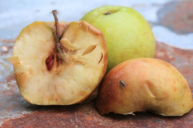 apfel-apple-verfault-faul